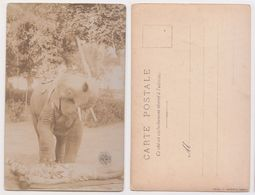 Elefante Con Donna Sdraiata Vestita All'orientale - Éléphant Et Femme Alongee Vêtue Orientale, Ante 1906 - Éléphants