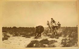 Carte-Photo - Ferrade - Le Gardian Courre Et Attrape Un Jeune Toro Pour Le Marquage - Photo George Arles - En TBE - Saintes Maries De La Mer