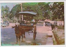 SRI LANKA - AK 380384 Buggy Cart - Pakistan