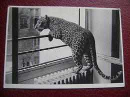 Tigre?   # A 689 - Tigres