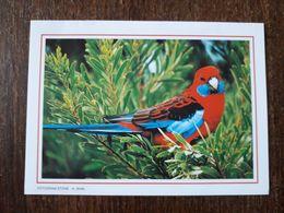 L20/206 Mini Calendrier Publicitaire. 1998. Oiseaux . Nantes - Grand Format : 1991-00