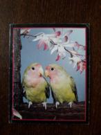 L20/207 Mini Calendrier Publicitaire. 1989. Oiseaux . Nantes - Calendriers
