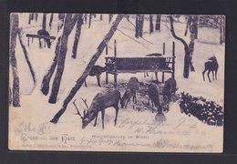 Ansichtskarte Leipzig Sachsen Harz Hirschfütterung Im Winter Nach Ballenstedt  - Deutschland