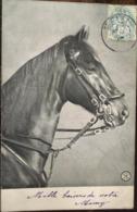 Cpa, Tête De Cheval, éd ALTEROCCA - TERNI - 5258 (ITALIA / ITALIE), écrite 1911?, Animal, Dos De Cp Non Divisé - Cavalli