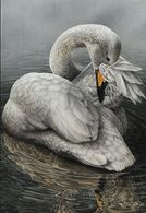 BUZIN . CYGNE CHANTEUR - 1985-.. Birds (Buzin)
