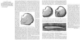 LA FORMATION Des PERLES 1899 - Sciences & Technique