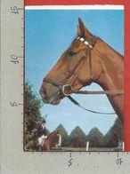 CARTOLINA NV ITALIA - Testa Di Cavallo - Primo Piano - Foto Schuster - 10 X 15 - Horses