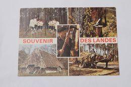Souvenir Des Landes - Aquitaine