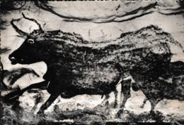 France Postcard: Grotte Prehistorique De Lascaux, Montignac-sur-Vezere (Dordogne) - Mint (G99-62) - Museum