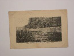 Bois De Chaville : Etang De Brise-Miche - Chaville