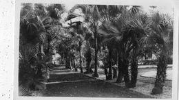 ILE DE LA REUNION JARDIN DE L'ETAT (CARTE PHOTO ) - La Réunion