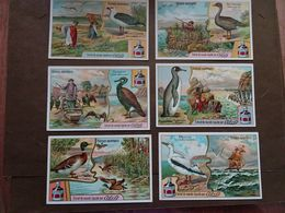 Série De 6 Chromos Cibils: Oiseaux Aquatiques - Other