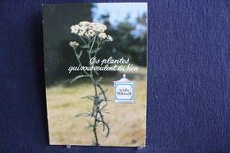 MO-293 -  Fleurs, Plantes & Arbres  Fleurs,  Ces Plantes Qui Vous Veulent Du Bien .Achillée Millefeuille  -  Circulé, - Heilpflanzen