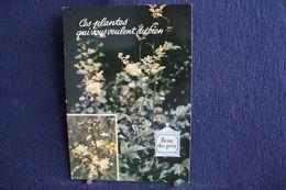 MO-358 -  Fleurs, Plantes & Arbres  Fleurs,  Ces Plantes Qui Vous Veulent Du Bien . Reine Des Prés -  Circulé, - Heilpflanzen