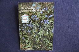 MO-359 -  Fleurs, Plantes & Arbres  Fleurs,  Ces Plantes Qui Vous Veulent Du Bien . Bourrache  -  Circulé, - Heilpflanzen
