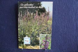 MO-360 -  Fleurs, Plantes & Arbres  Fleurs,  Ces Plantes Qui Vous Veulent Du Bien . Sauge  -  Circulé, - Heilpflanzen