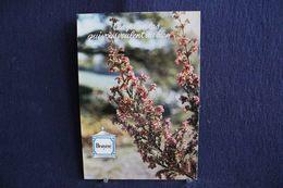MO-362 -  Fleurs, Plantes & Arbres  Fleurs,  Ces Plantes Qui Vous Veulent Du Bien . Bruyère  -  Circulé, - Heilpflanzen