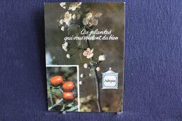 MO-363 -  Fleurs, Plantes & Arbres  Fleurs,  Ces Plantes Qui Vous Veulent Du Bien . Aubépine  -  Circulé, - Heilpflanzen