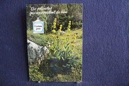 MO-364 -  Fleurs, Plantes & Arbres  Fleurs,  Ces Plantes Qui Vous Veulent Du Bien . Gentiane Jaune  -  Circulé, - Heilpflanzen