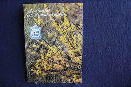 MO-365 -  Fleurs, Plantes & Arbres  Fleurs,  Ces Plantes Qui Vous Veulent Du Bien . Genêt à Balai  -  Circulé - Heilpflanzen