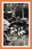 A634 / 623 76 - CLERES Parc Zoologique Flamants Roses - France