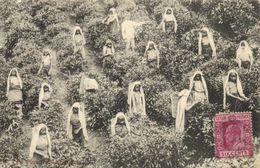 Les Ramasseuses Au Travail + Timbre Ceylon Six Cents RV - Sri Lanka (Ceylon)
