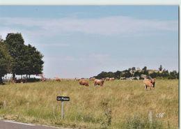 CPM 12 MONTPEYROUX ... La Plaine . Route D'Espalion (Livenais LU010719) Vaches - France
