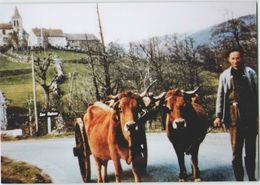 CPM 48 LES SALCES ... Attelage De Vaches à L'entrée Du Bourg (Livenais) - France