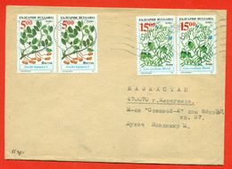 Bulgaria 1995. The Envelope  Passed The Mail. - Other
