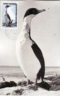 TAAF    14 Cormoran Sur Carte Maximum  Oblitérés Used 23 11 1960   Kerguelen Used - Brieven En Documenten