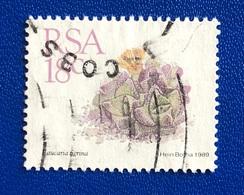 CACTUS / SUCCULENTS  - ANNO/YEAR 1989 - África Del Sur (1961-...)