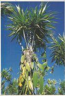 CPM, île De La Réunion , N°6022 , Vanille à Bras Panon ,Phot. E. Valentin, Ed. Hoa-Qui - Reunion
