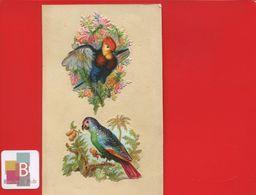 Deux Jolis Chromos Decoupis Oiseaux Exotiques Perroquet Collés Sur Support - Animals