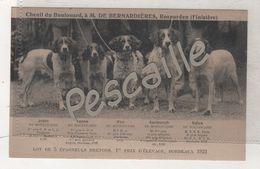 CHIENS - CP CHENIL DU BOULOUARD A M. DE BERNARDIERES ROSPORDEN FINISTERE - LOT DE 5 EPAGNEULS BRETONS 1922 - Chiens