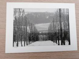 LUXEMBOURG * Remich - Les Vignobles En Hiver - Remich