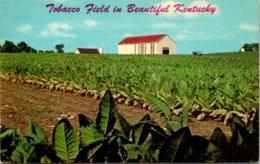 Kentucky Typical Tobacco Field - Etats-Unis
