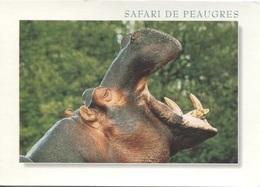 CPM - SAFARI PARC De PEAUGRES - HIPPOPOTAME - Edition Combier - Hippopotamuses