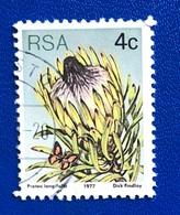 FIORI / FLOWERS - ANNO/YEAR 1977 - África Del Sur (1961-...)