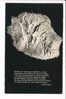 La Réunion Relief De L' île Bourbon Maillard ( Plan Carte Géographique André Chénier )  ( Recto Verso ) Format C.P.A. - La Réunion