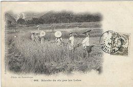 Viet-Nam : Tonkin, Récolte De Riz Par Les Lolos - Vietnam