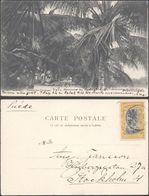 Carte Postale - Congo : Boma Avenue Des Cocotiers / Voyagée & écrite Vers La Suède. - Congo Belge - Autres