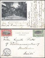 Carte Postale - Congo : Allée Des Cocotiers à Boma / Voyagée Vers La Suède. - Congo Belga - Otros