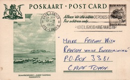 Serie Entier Postal 1 1/2d - Postcard South Africa: Skaapboerdery - Sheep Farming Harrismith - Collections, Lots & Séries