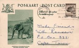 Serie Entier Postal 1 1/2d - Postcard South Africa: Kruger National Park (Nationale Krugerwildtuin) Elephant - Collections, Lots & Séries