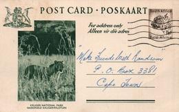 Serie Entier Postal 1 1/2d - Postcard South Africa: Kruger National Park (Nationale Krugerwildtuin) Lionne - Collections, Lots & Séries