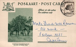Serie Entier Postal 1 1/2d - Postcard South Africa: Kruger National Park (Nationale Krugerwildtuin) Girafes - Collections, Lots & Séries