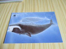 Féroé - WWF - Baleine Boréale. - Färöer
