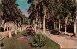 Florida Palm Beach Royal Palm Way Handcolored Albertype - Palm Beach