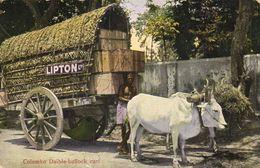 Colombo Daible Bullock Cart LIPTON - Sri Lanka (Ceylon)