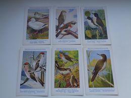 Beau Lot De 9 Cartes Postales Oiseaux  Oiseau  Illustrateur H.Dupond     Mooi Lot Van 9 Postkaarten Van Vogels  Vogel - 5 - 99 Postcards